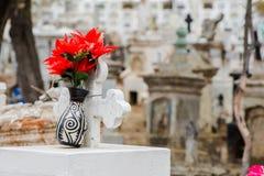 Einige rote Rosen, zum sich an meines Vaters zu erinnern stockfoto