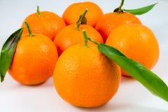 Einige süße Tangerinen auf Weiß stockfotografie