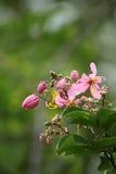 Einige schöne Blumen Stockfotografie