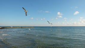 Einige Seemöwen, die über einem ruhigen See, auf dem Hintergrund eines blauen Himmels mit Wolken mähen lizenzfreie stockbilder
