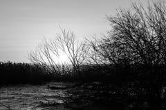 Einige skelettartige Baumschattenbilder auf einem See, mit der Sonne niedrig auf dem Horizont Stockfotografie