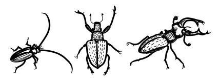 Einige Sorten Käfer Stockbild