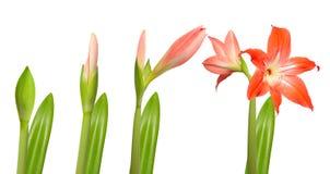 Einige Tage des Blumen-Lebens. Lizenzfreie Stockbilder
