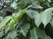 einige treiben guter pic Blätter Stockbild