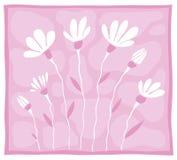 Einige weiße Blumen auf einem rosafarbenen Hintergrund Stockfotos