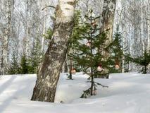 Einige Weihnachtsbälle auf dem Tannenbaum im Wald stockfotografie