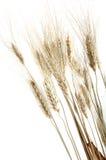 Einige Weizenspitzen Stockfotografie
