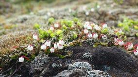 Einige wilde Blumen Lizenzfreie Stockfotografie
