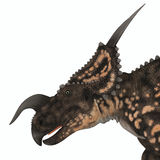 Einiosaurus Dinosaur Head Royalty Free Stock Image