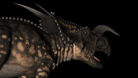 Einiosaurus Dinosaur Rotation. Animation of Einiosaurus dinosaur gyrating 360 degree on black background stock footage