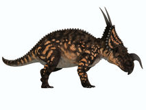 Einiosaurus Side Profile Royalty Free Stock Photography