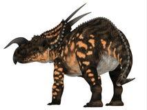Einiosaurus Dinosaur Tail royalty free stock photography