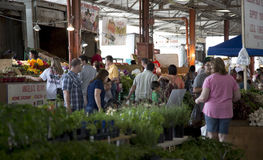 Einkauf am Landwirtmarkt Lizenzfreies Stockbild