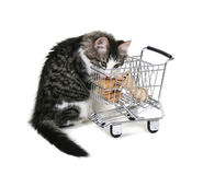 Einkaufen-Miezekatze Lizenzfreie Stockfotos
