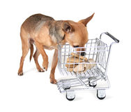 Einkaufenhund Stockbild