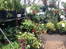 Einkaufszentrum, Blumen und Gartenarbeitausrüstung verkaufend Schön verpackte Blumen in den Töpfen stehen auf Regalen stockfotografie