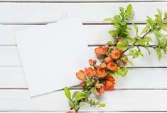 Einklebebuchseite mit roten Blumen Lizenzfreies Stockbild