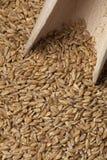 Einkorn-Weizensamen Lizenzfreie Stockbilder