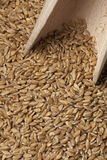 Einkorn wheat seeds Royalty Free Stock Images