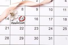 Einkreisen der Datum Planung des Schwangerschaftskalenders stockfotos