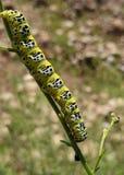 Eins der nützlichen Insekten stockbild