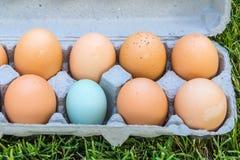 Eins dieser Eier ist nicht wie die anderen Lizenzfreies Stockbild