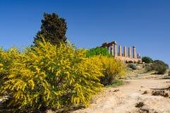 Das Tal der Tempel Lizenzfreie Stockfotos