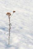 Einsam auf dem Schnee Stockfotografie