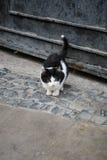 Einsam-aussehendes nettes Kätzchen auf der alten Stadtstraße Lizenzfreies Stockfoto