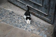 Einsam-aussehendes nettes Kätzchen auf der alten Stadtstraße Lizenzfreie Stockbilder