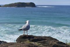 Einsam-Seemöwe-sitzen-auf-d-Felsen-auf-d-Hintergrund-von-d-oce Lizenzfreies Stockfoto