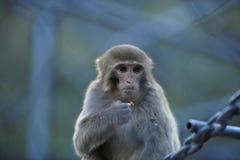 Einsame Affen Lizenzfreies Stockbild