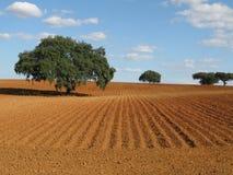 Einsame Bäume Stockfotos