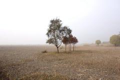 Einsame Bäume auf beträchtlichem Feld Lizenzfreie Stockfotos