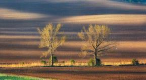 Einsame Bäume auf den moravian Gebieten bei buntem Sonnenuntergang im Frühjahr Lizenzfreies Stockbild