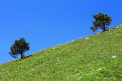Einsame Bäume der Paare, die auf der Steigung wachsen Stockbild