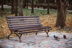 Einsame Bank im Herbstpark Stockfoto
