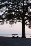 Einsame Bank und großes Baumschattenbild Stockfotografie