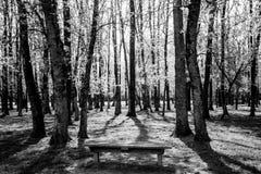 Einsame Bank unter Wald lizenzfreies stockfoto