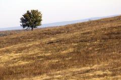 Einsame Baumlandschaft Stockfotografie