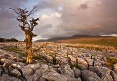 Einsame Baumstellung Stockfotografie
