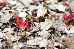 Einsame Blätter Lizenzfreie Stockbilder
