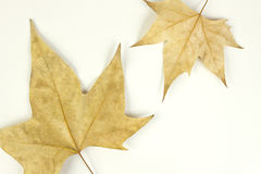 Einsame Blätter Stockbild