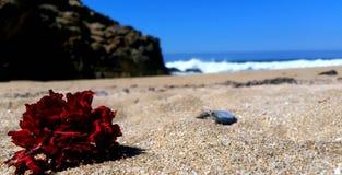 Einsame Blume lizenzfreies stockfoto