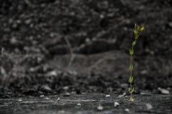Einsame Blume Lizenzfreie Stockbilder
