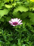 Einsame Blume Lizenzfreies Stockbild