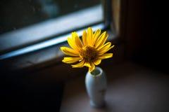 Einsame Blume stockbild