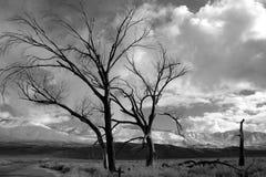 Einsame Bäume nach einem Sturm Stockfoto
