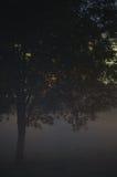 Einsame einzelne Baumast-Nahaufnahme, nebeliger Dämmerungs-Nebel, Misty Silhouette In Low Fog-Dämmerung, vertikaler heller Hinter lizenzfreies stockbild