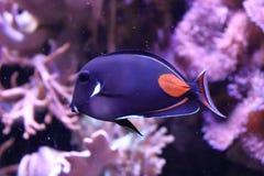 Einsame Fische im Zoo in Deutschland lizenzfreies stockbild